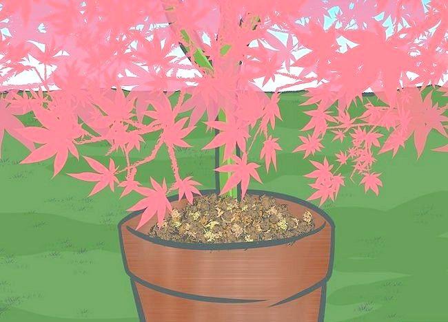 Imaginea intitulată Frunze de mulci cu mașina de tuns iarba Pasul 9