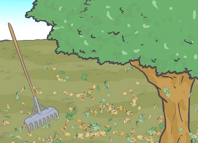 Imagine intitulată Frunze de mulci cu mașină de tuns iarba Pasul 2