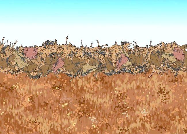 Imaginea intitulată Frunze de mulci cu mașina de tuns iarba Pasul 4