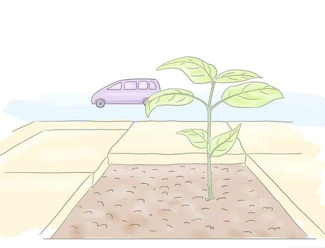 Cum sa faci Guerrilla Gardening