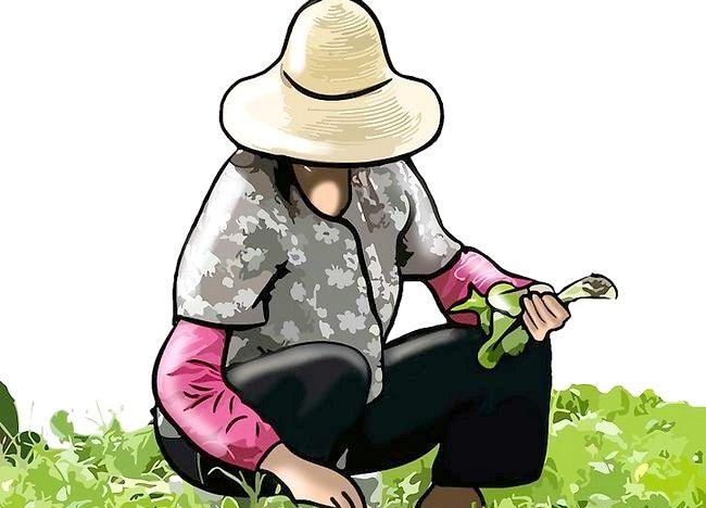 Imaginea intitulată Începeți în mișcarea Slow Food Pasul 7