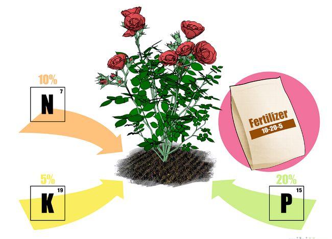 Imaginea intitulată Fertilize Roses Step 1.jpg