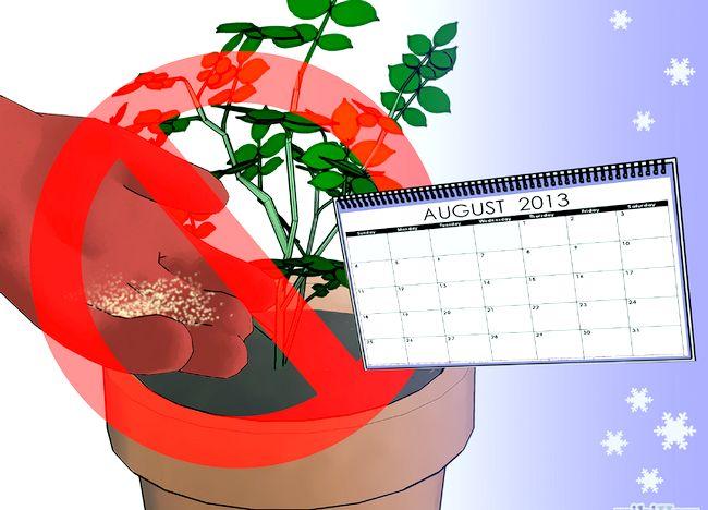 Imagine intitulată Fertilize Roses Step 14.jpg