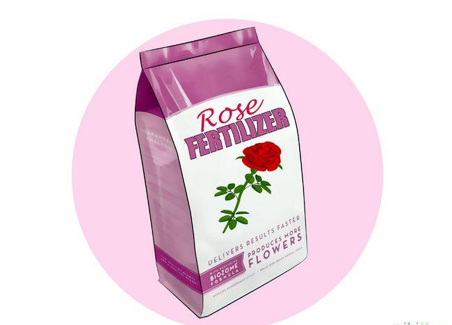 Imaginea intitulată Fertilize Roses Step 2.jpg