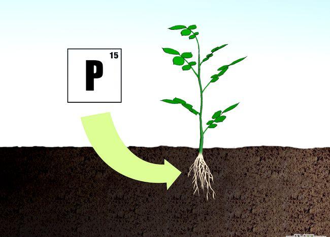 Imaginea intitulată Fertilize Roses Step 4.jpg