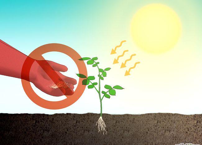 Imaginea intitulată Fertilize Roses Step 10.jpg
