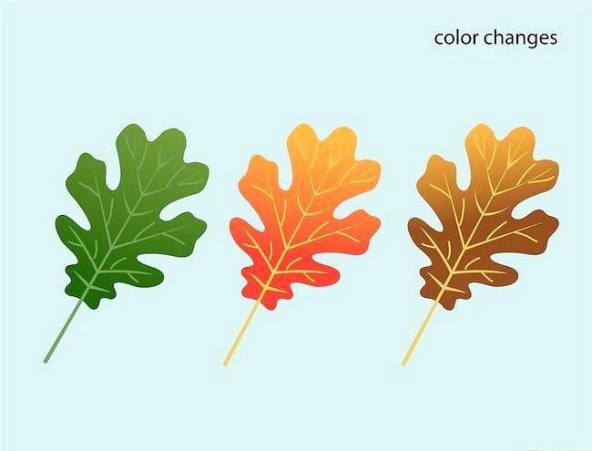 Imagine intitulată Identificați frunzele de stejar Pasul 4