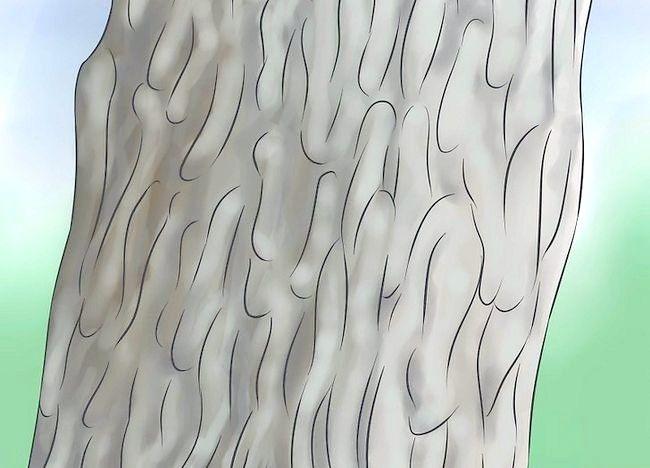 Imaginea intitulată Identificați un copac de copac Pasul 2