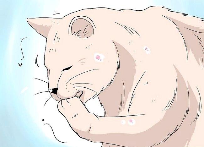 Imaginea intitulată Deal cu pierderea părului la pisici Pasul 1