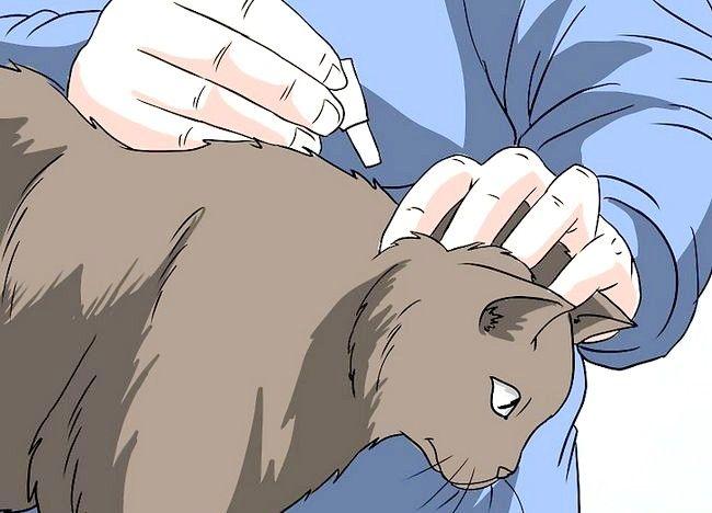 Imaginea intitulată Deal cu pierderea părului la pisici Pasul 14