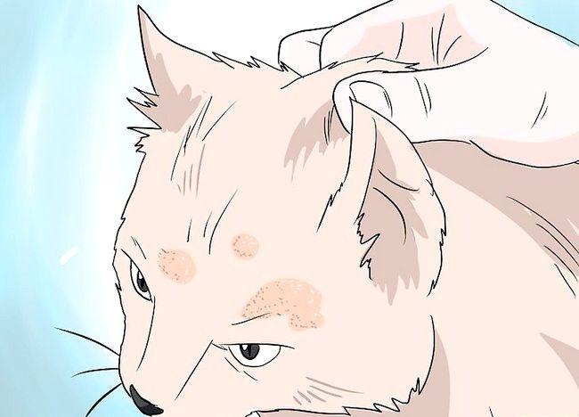 Imaginea intitulată Deal cu pierderea părului la pisici Pasul 5