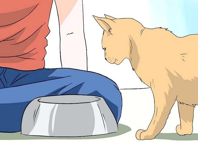 Imaginea intitulată Deal cu pierderea părului la pisici Pasul 9