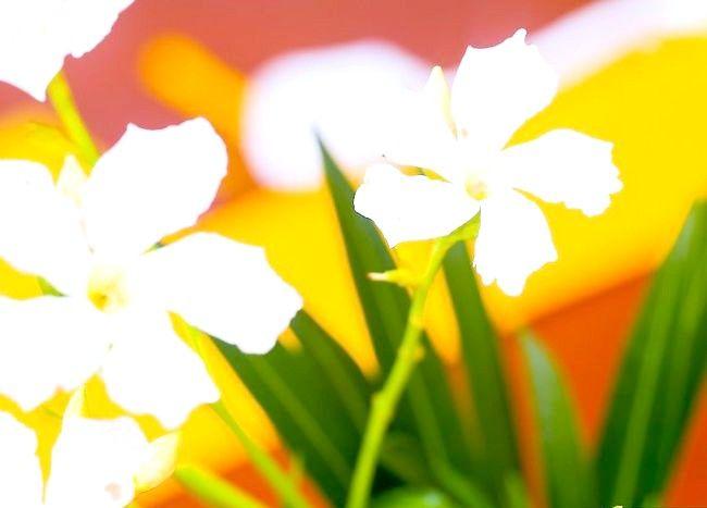 Imaginea intitulată Keep Flowers Fresh Pasul 1