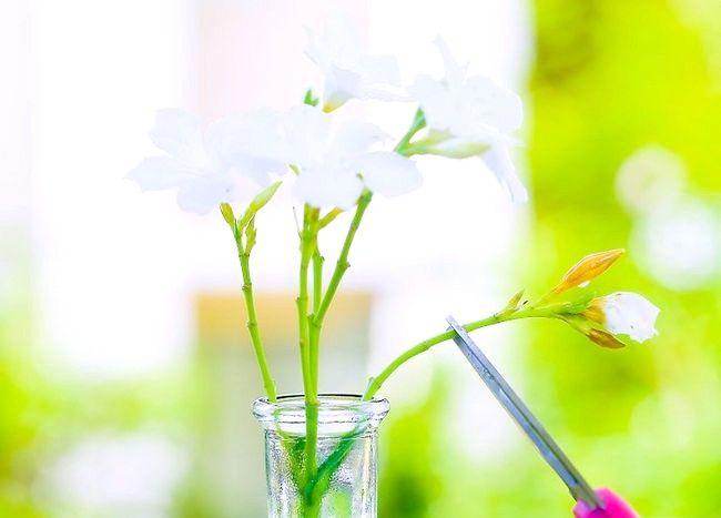 Imagine intitulată Păstrați flori proaspete Pasul 11