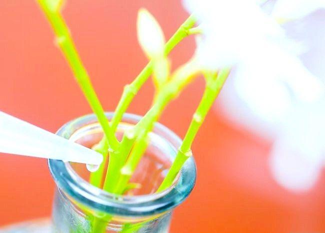 Imaginea intitulată Keep Flowers Fresh Pasul 15