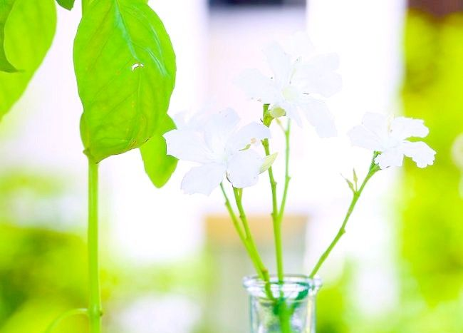Imagine intitulată Keep Flowers Fresh Pasul 10