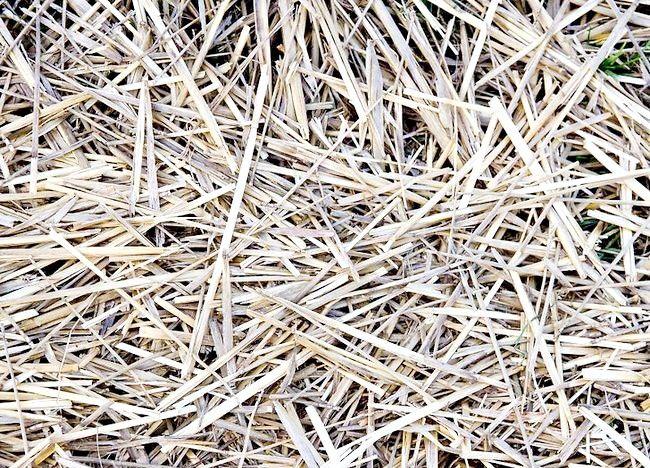 Imagine intitulată Menținerea unui pasaj de compost Pas 5