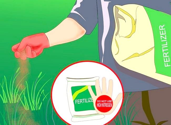 Imagine intitulată Obțineți și mențineți un pas de pădure sănătos 5