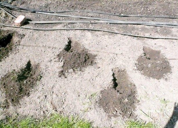 Cum să crească dovlecei pe terenuri înalte