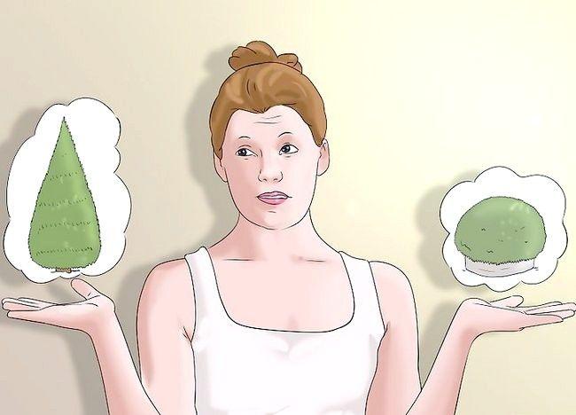 Cum să plantezi un gard viu