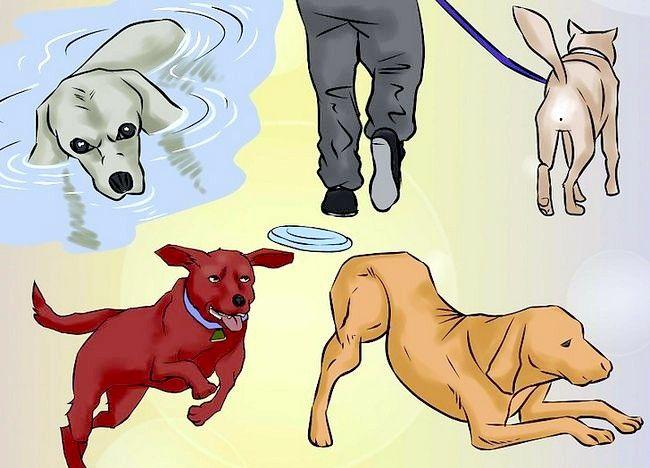 Cum să practicați exercițiul cu câinele dvs.