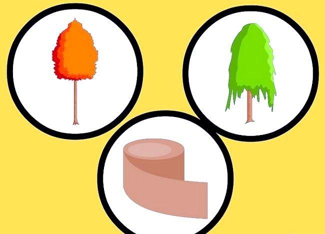 Cum să pregătești copaci plantați pentru iarnă