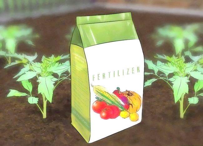 Imagine intitulată Pregătiți solul de grădină pentru tomate Pasul 3