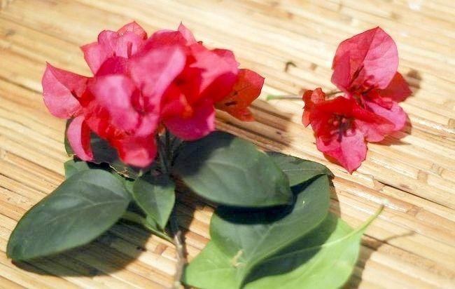 Imagine intitulată Păstrați florile tăiate cu ceară Pasul 4