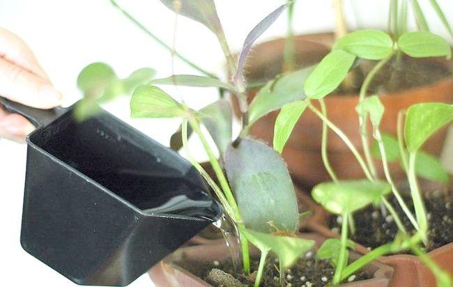 Cum să preveniți acarienii în plante domestice