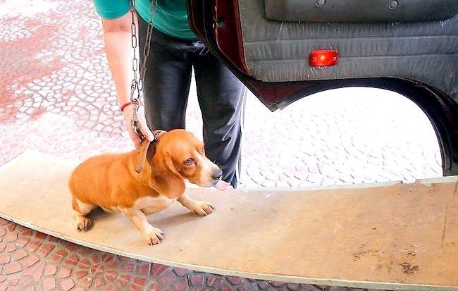 Imaginea intitulată Prevenirea artritei la câini Pasul 3