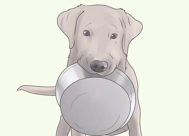Imaginea intitulată Prevenirea mange la câini Pasul 14
