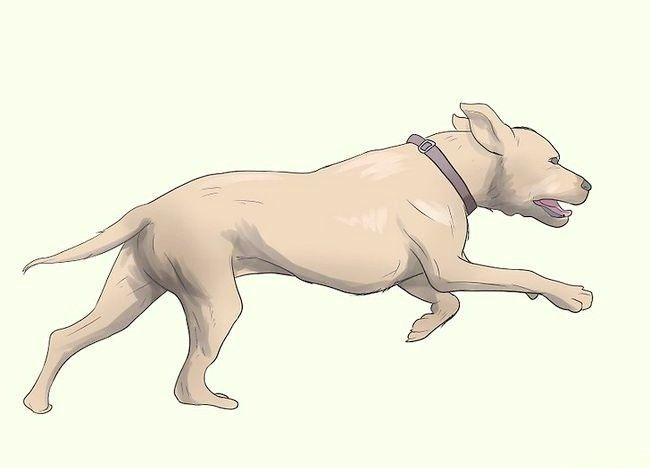 Imaginea intitulată Împiedicați mange în câini Pasul 18