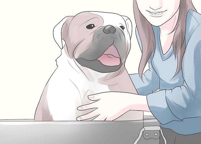 Imaginea intitulată Împiedicați mange în câini Pasul 22