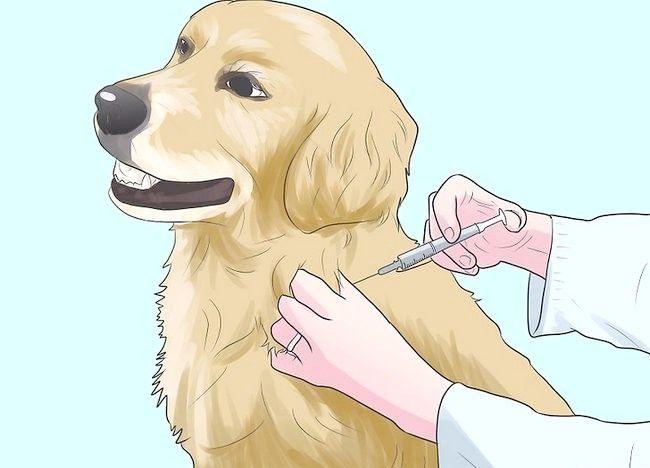 Imaginea intitulată Împiedică mange în câini Pasul 3
