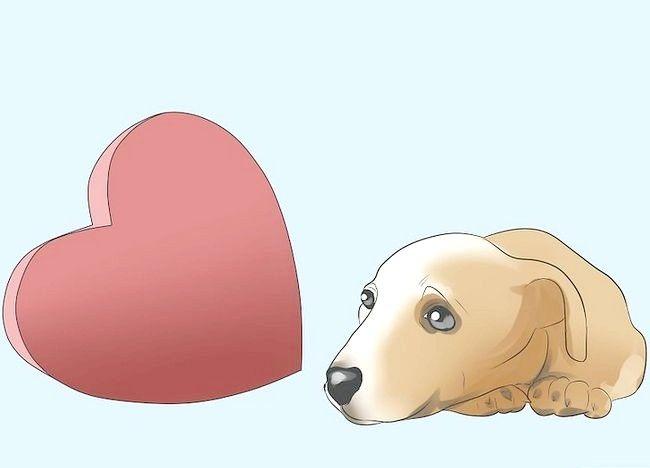 Imagine intitulată Prevenirea mange la câini Pasul 4