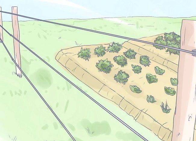 Imaginea intitulată Protejați-vă casa și grădina de elefanți Pasul 6