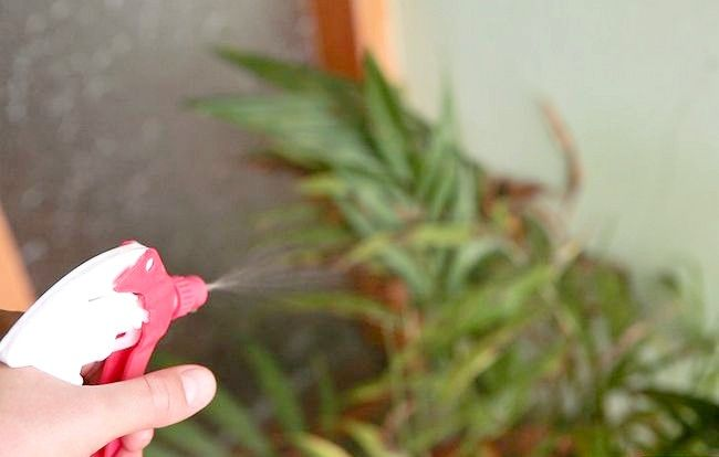 Imaginea intitulată Folosiți frunzele verzi de ceai verde Pas 5