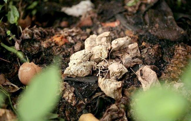 Imaginea intitulată Folosiți frunzele verzi de ceai verde Pasul 6