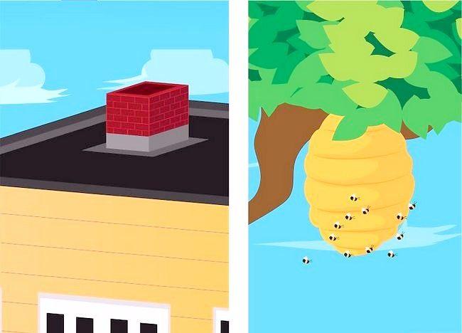 Cum să eliminați albinele de la un coș de fumat
