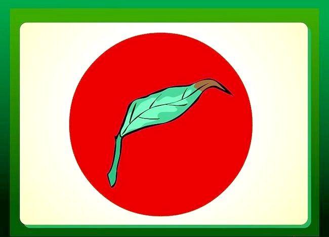 Imaginea intitulată Îndepărtați sfaturile de pe frunzele plantelor de casă Pasul 1