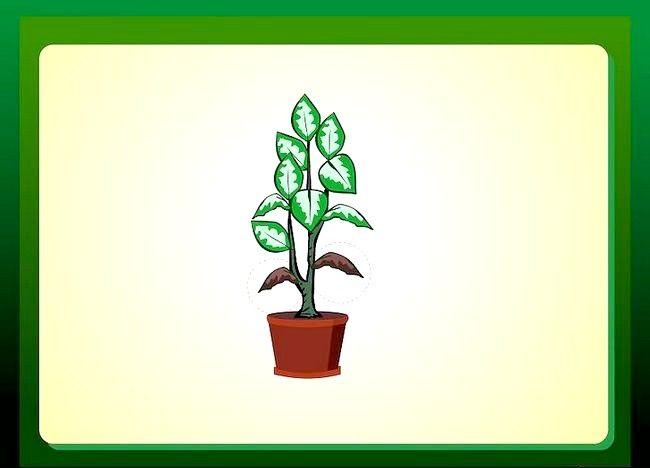 Imaginea intitulată Îndepărtați sfaturile roșii din frunzele plantelor de casă Pasul 6