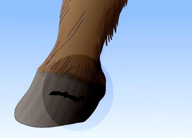 Imaginea intitulată Salvarea unui cal abuzat Pasul 15