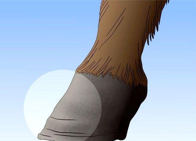 Imaginea intitulată Salvarea unui cal abuzat Pasul 16