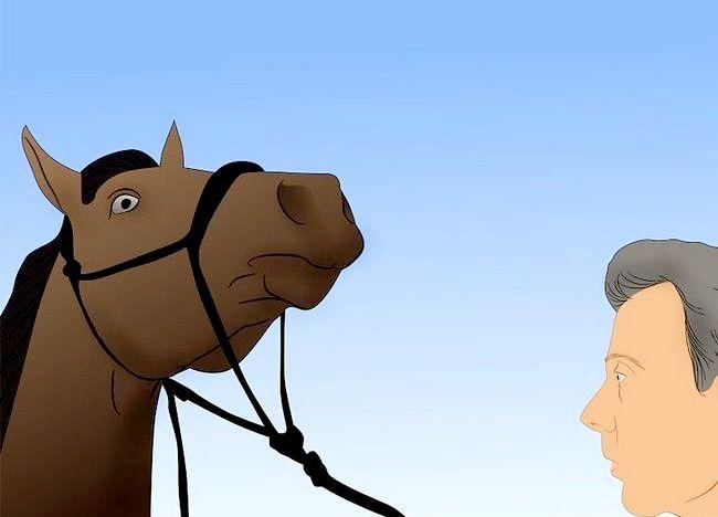 Imaginea intitulată Salvarea unui cal abuzat Pasul 20