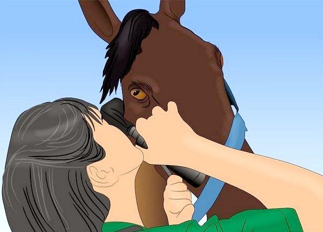 Imaginea intitulată Salvarea unui cal abuzat Pasul 2