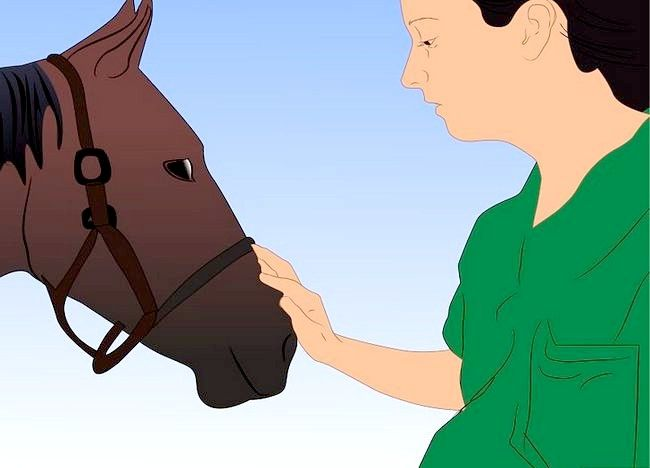 Imaginea intitulată Salvarea unui cal abuzat Pasul 21