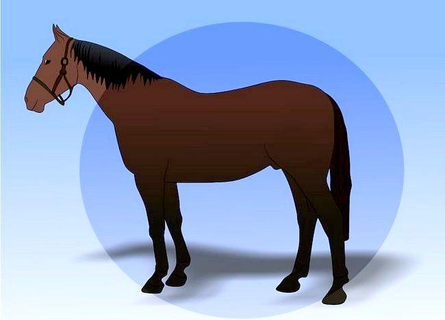 Imaginea intitulată Salvarea unui cal abuzat Pasul 22
