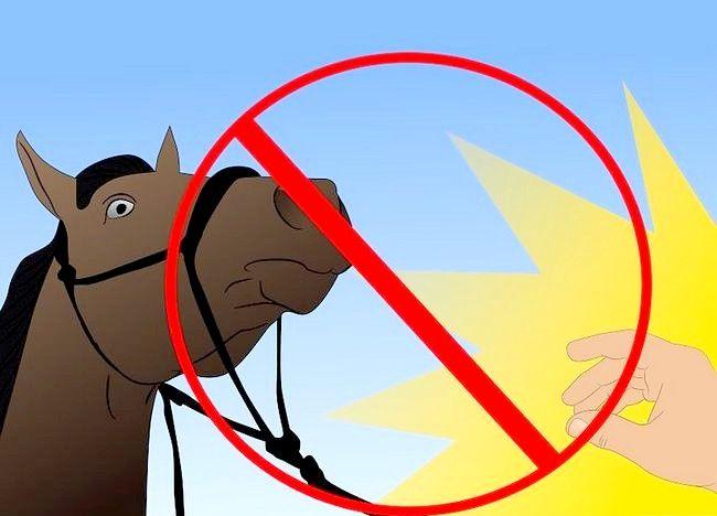 Imaginea intitulată Salvarea unui cal abuzat Pasul 23