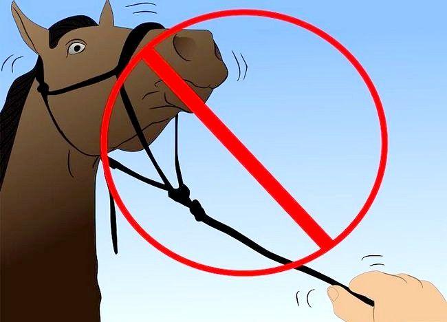 Imaginea intitulată Salvarea unui cal abuzat Pasul 26