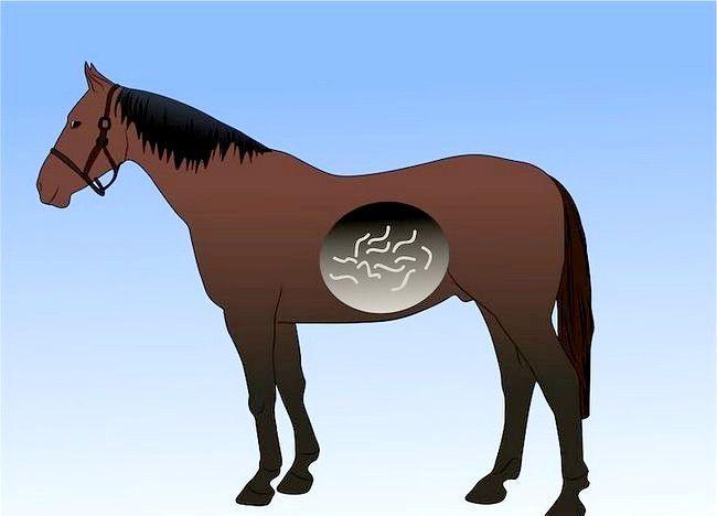 Imaginea intitulată Salvarea unui cal abuzat Pasul 4